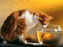 cat_and_goldfish.jpg